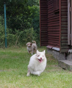 Famy & Kinder - 8 týdnů / 8 weeks old