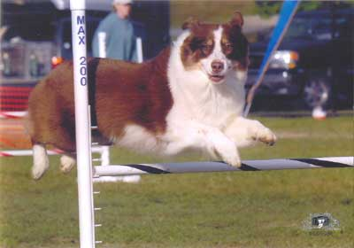 ASCA Nationals, Agility Trial Augusta, NJ 2007